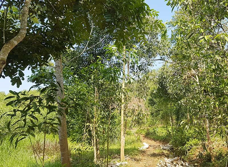 Mảnh đất mà ông Trần Chức đòi từ ông Trần Văn Anh được Tòa án nhân dân huyện Tiên Phước khẳng định không có cơ sở. Ảnh: D.L