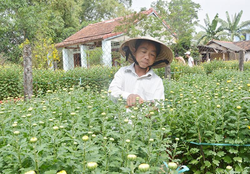 Võ Như Trọng khởi nghiệp từ niềm đam mê hoa kiểng. Ảnh: N.TRANG