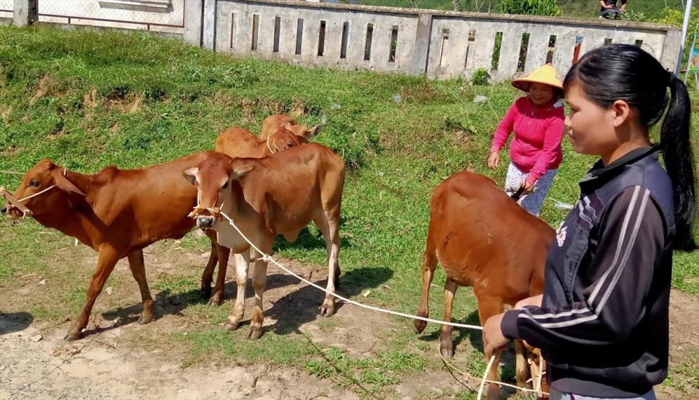 Người dân xã Phước Năng nhận bò giống. Ảnh: H.A