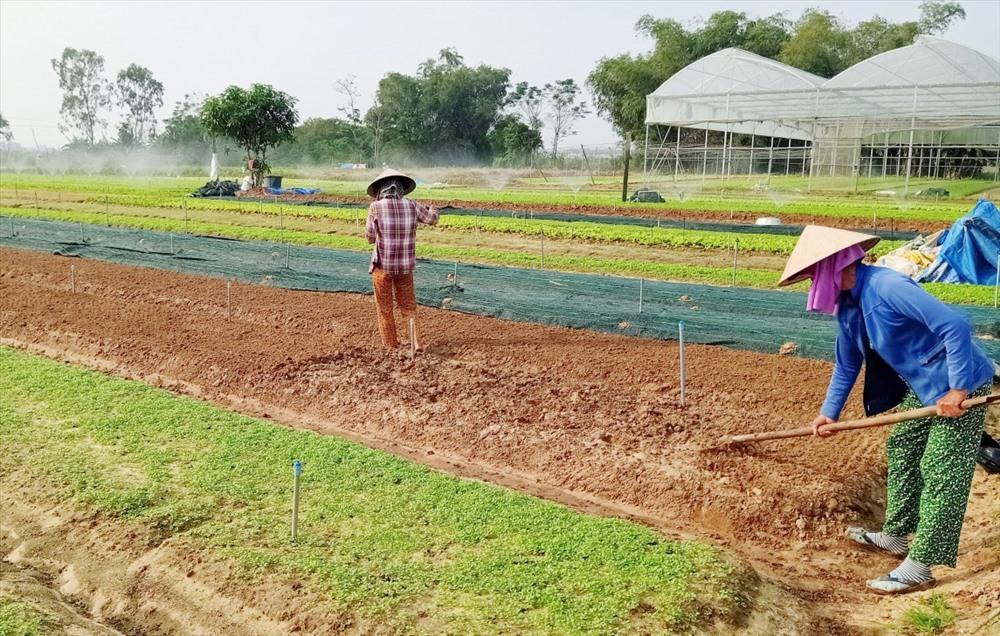 Người dân khối phố Bình Ninh làm đất chuẩn bị vụ rau mới. Ảnh: L.T