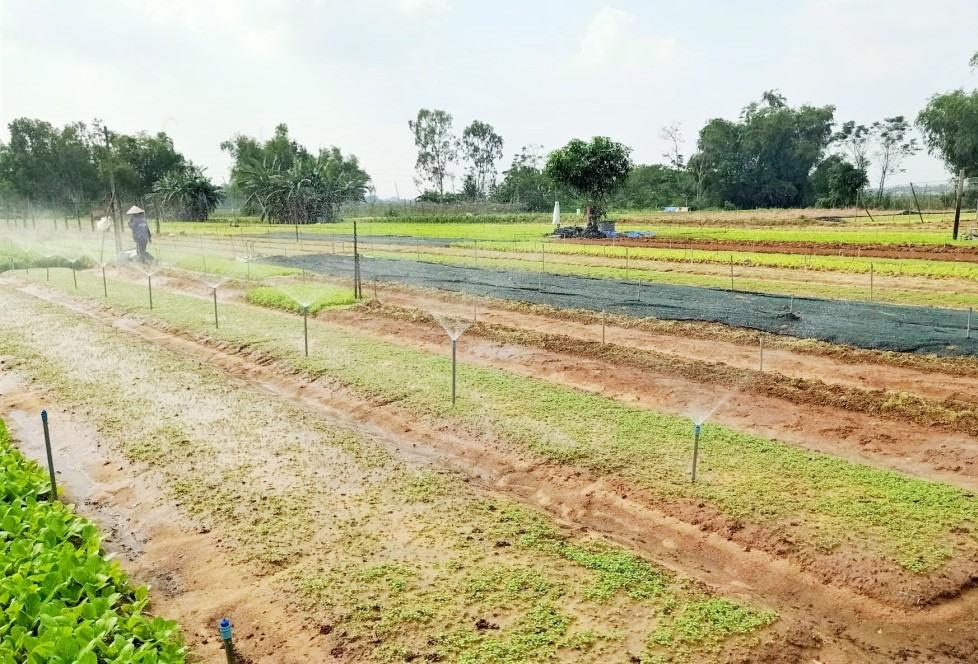 Hệ thống tưới nước tự động giúp giảm công sức lao động, mang lại năng suất cao. Ảnh: L.T