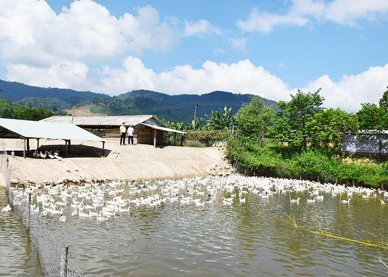 Mô hình chăn nuôi vịt kết hợp nuôi cá của nông dân Nguyễn Đăng Quyết (xã Phước Năng) mang lại hiệu quả kinh tế cao. Ảnh: H.A