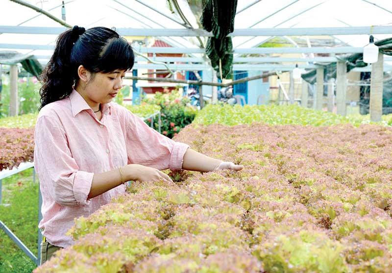 """Các """"start-up"""" trẻ nông nghiệp trên địa bàn tỉnh cần mạnh dạn nghiên cứu ứng dụng công nghệ để tạo đột phá trong quá trình khởi nghiệp. Ảnh: A.T"""