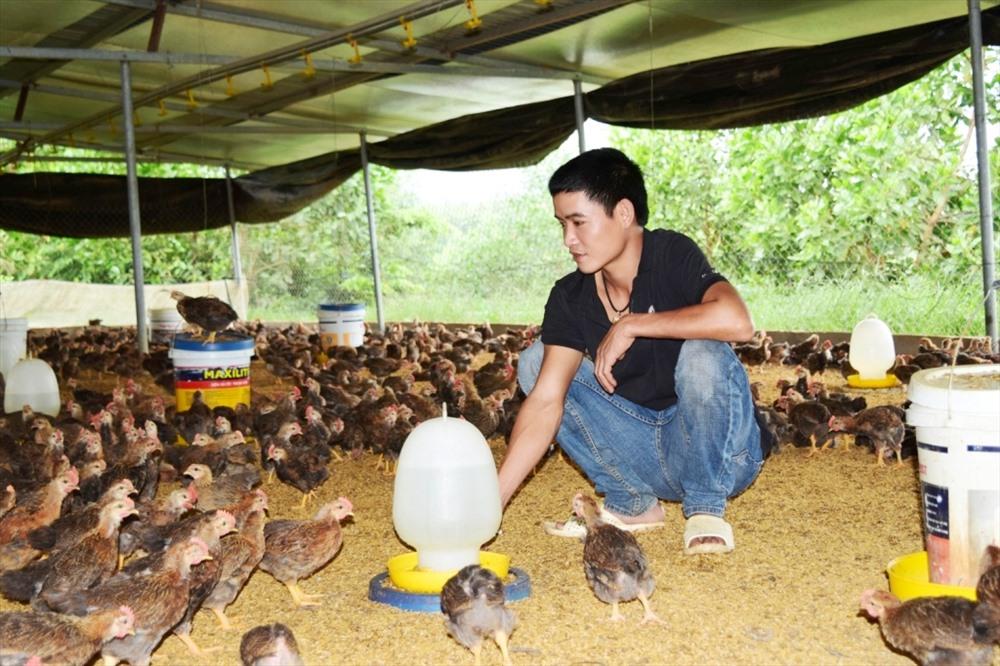 Anh Nguyễn Đức Trí thuê đất mở trại gà. Ảnh: THÁI CƯỜNG