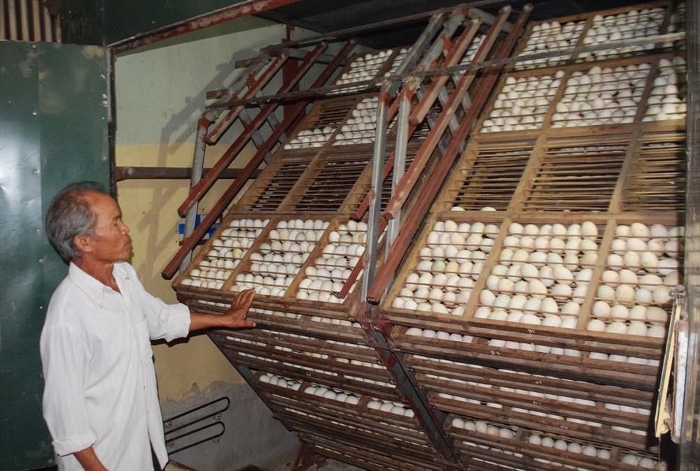 Máy ấp trứng cung cấp trứng lộn, con giống cho người dân địa phương. Ảnh: THANH THẮNG