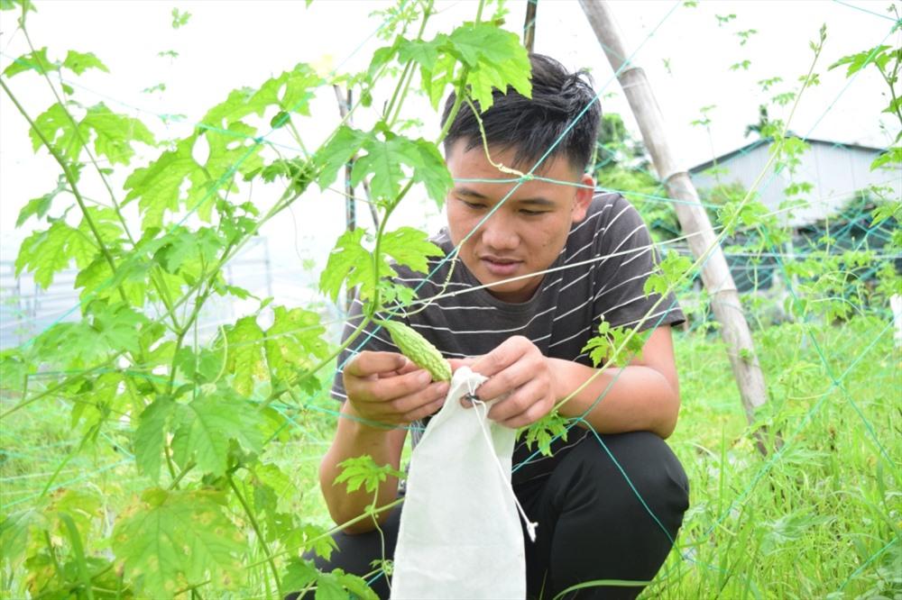 Rau quả trang trại Gia An Farm trồng theo phương pháp hữu cơ. Ảnh: THÁI CƯỜNG