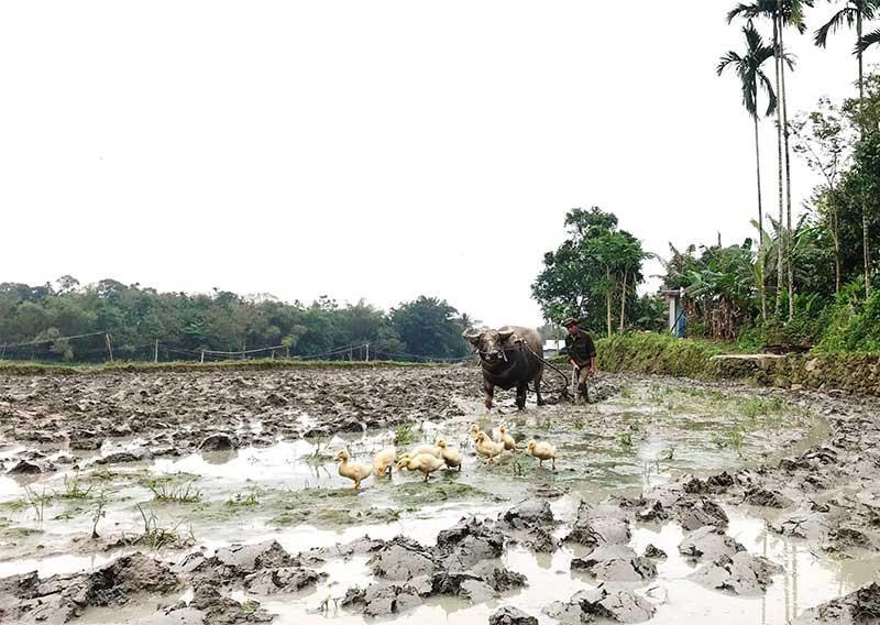 Nông dân Tiên Phước đang tất bật triển khai các bước chuẩn bị gieo sạ vụ đông xuân 2019 - 2020. Ảnh: N.H
