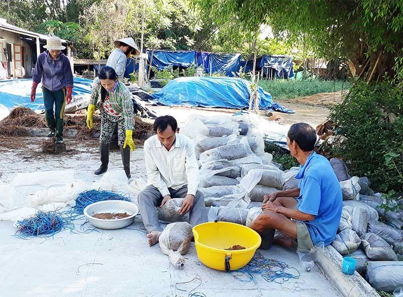 Mô hình trồng nấm rơm ở nhiều địa phương mang lại hiệu quả kinh tế cao. Ảnh: N.P