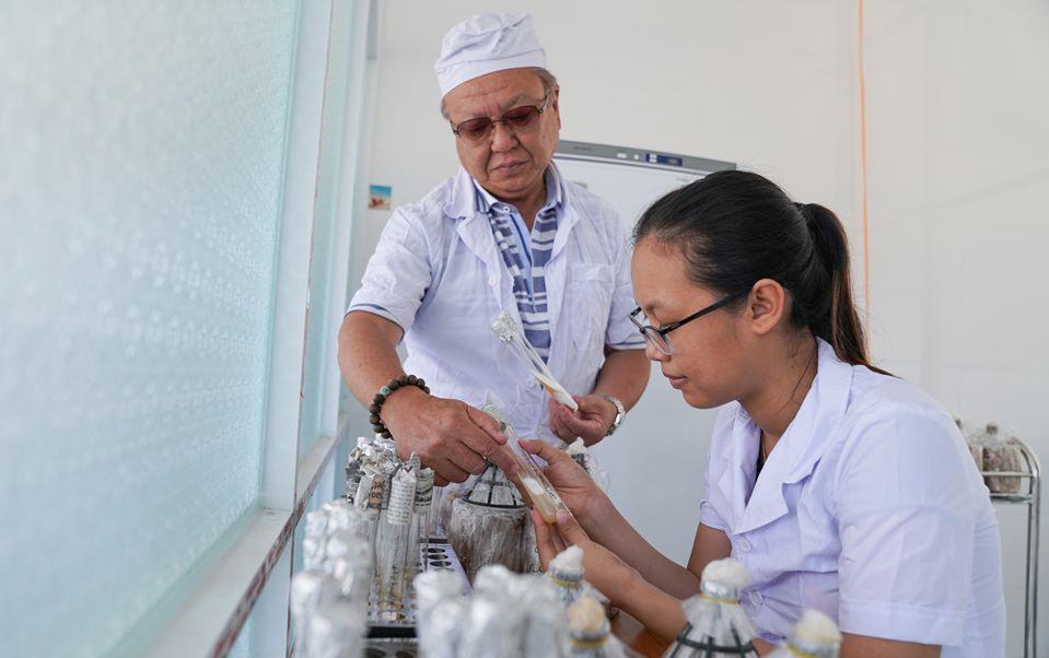 Giáo sư Shoji Ohga (Nhật Bản) hướng dẫn kỹ thuật phân lập, thuần chủng, nhân giống nấm cho nhân viên CT Linh chi Quảng Nam. Ảnh: PHAN VINH