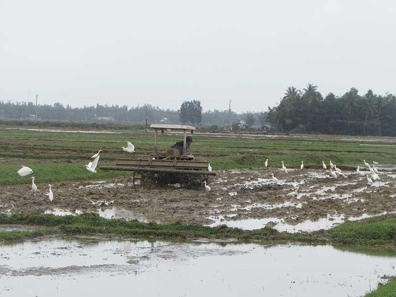 Nông dân NúiThành làm đất chuẩn bị cho vụ sản xuất đông xuân. Ảnh: VĂN PHIN