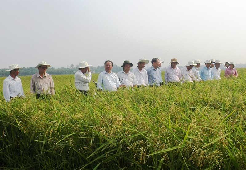 Cần nhân rộng mô hình liên kết sản xuất giống lúa hàng hóa để nâng cao hiệu quả kinh tế và tạo đầu ra ổn định cho nông dân.Ảnh: V.S