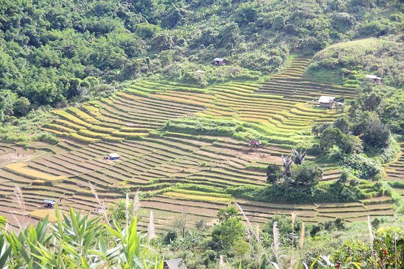 Năm 2019, Nam Giang đảm bảo chỉ tiêu về sản xuất nông nghiệp. TRONG ẢNH: Đồng bào Cơ Tu xã Chơ Chun thu hoạch lúa mùa. Ảnh: ALĂNG NGƯỚC