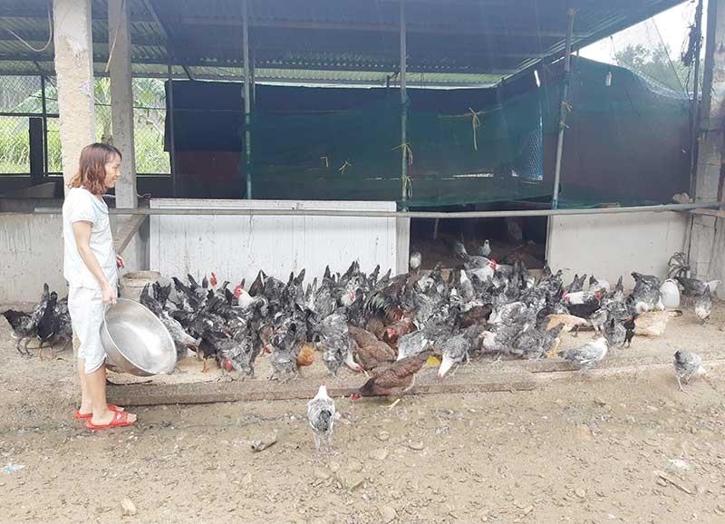 Người dân xã Trà Giang đã tiếp cận với kỹ thuật chăn nuôi an toàn sinh học. Ảnh: H.LIÊN