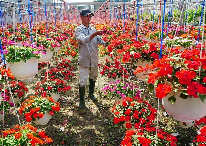 Anh Thái Văn Trưởng chăm sóc các loại hoa treo được trồng trong nhà lưới. Ảnh: NGUYỄN ĐIỆN NGỌC