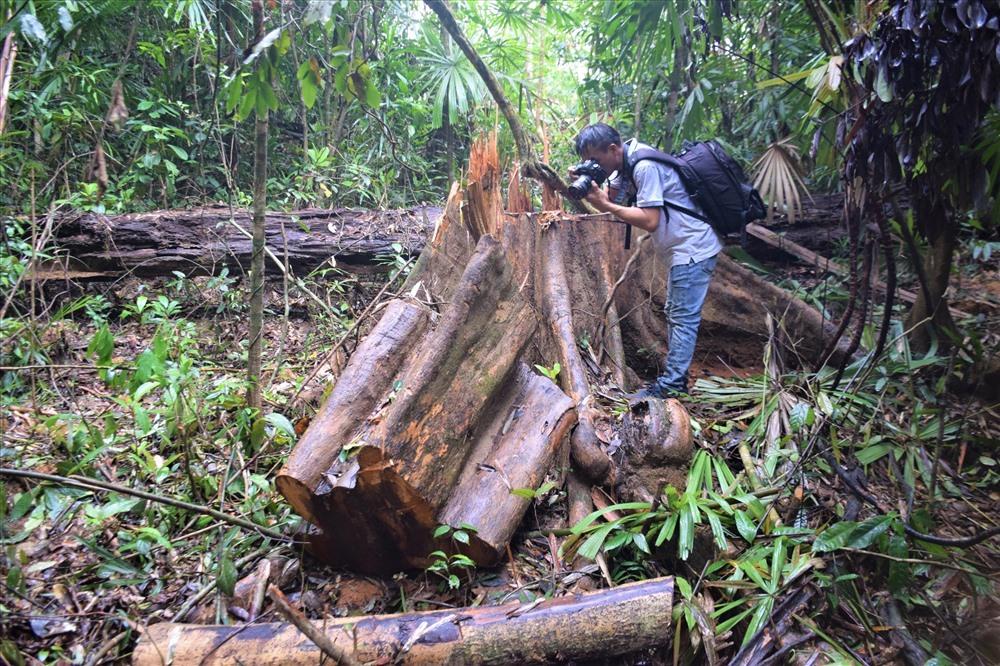 Vị trí rừng bị phá cách quốc lộ 40B chưa đầy 2km. Ảnh: THANH THẮNG