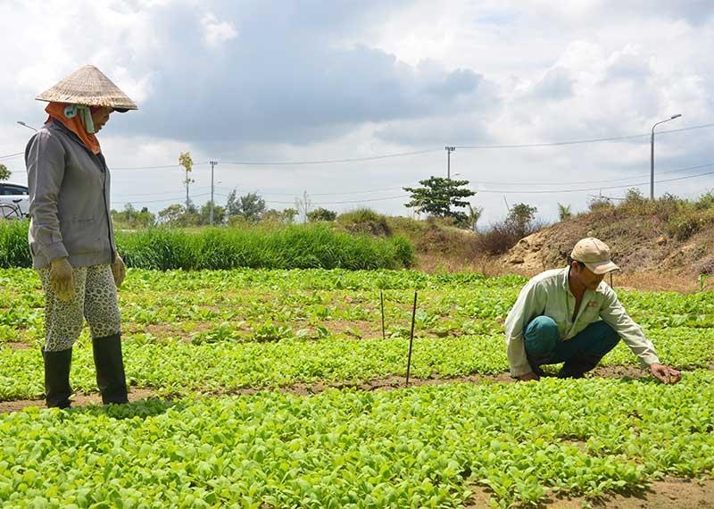 Đất nông nghiệp vốn được cho là bình ổn giá vẫn được nhiều địa phương đề xuất tăng trong thời kỳ 2020 - 2024. Ảnh: T.H