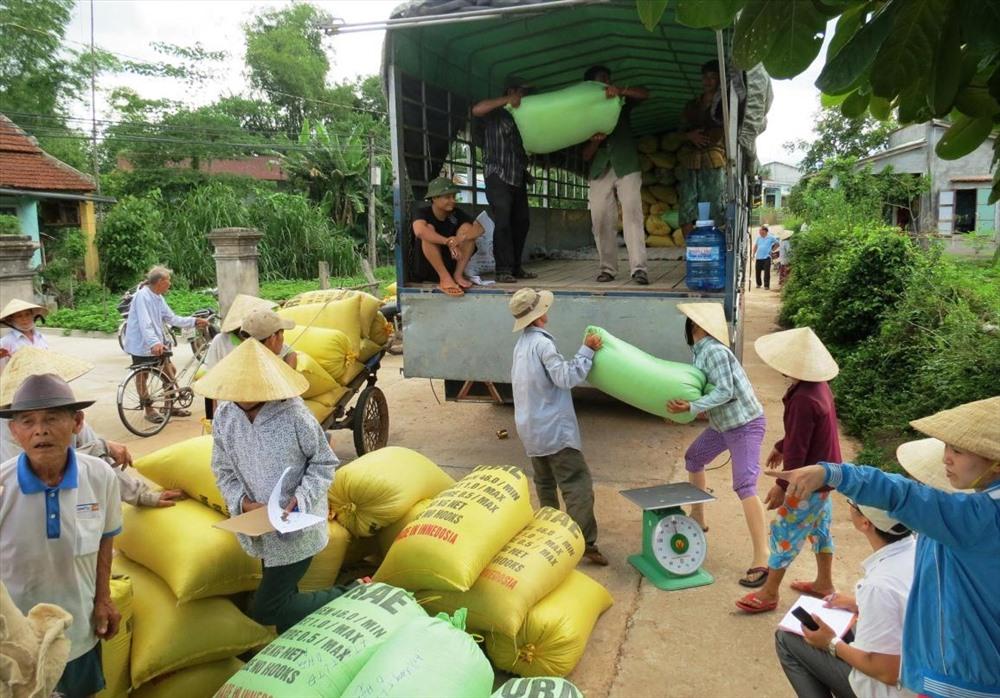 Nhiều HTX nông nghiệp chú trọng liên kết với doanh nghiệp tổ chức sản xuất giống lúa hàng hóa theo phương thức bao tiêu đầu ra sản phẩm. Ảnh: VĂN SỰ