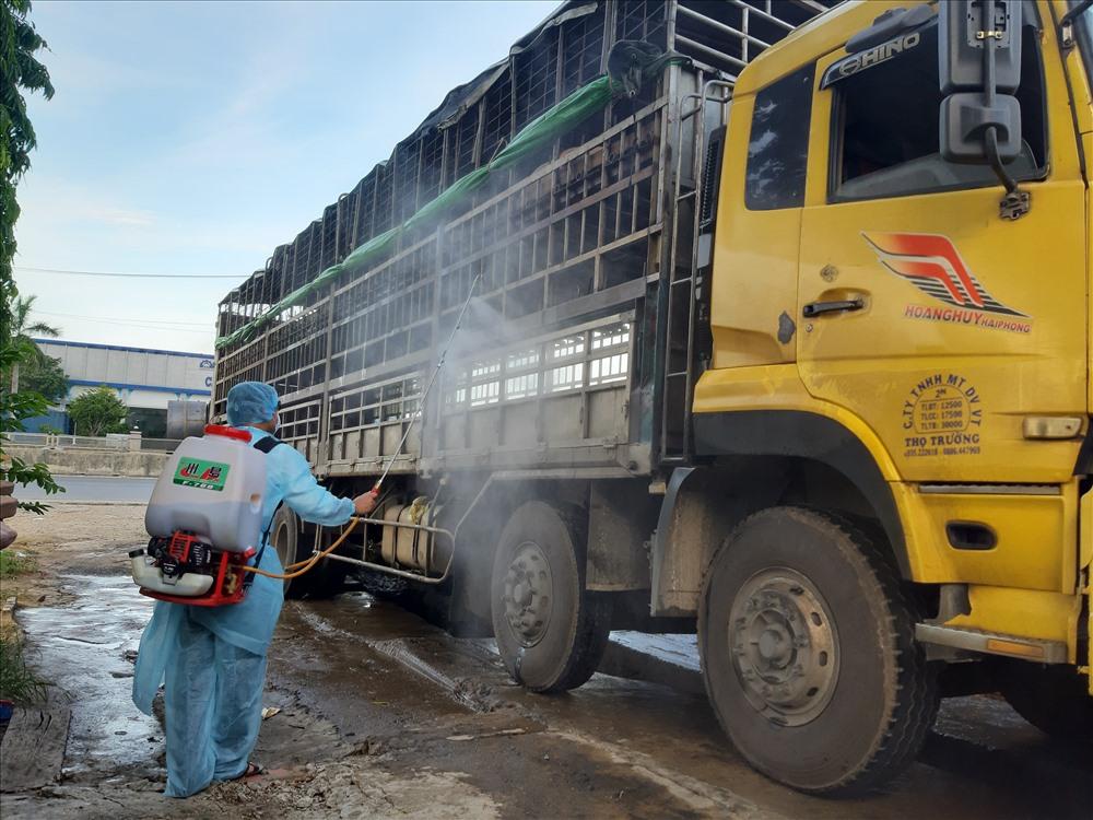 Chiếc xe tải chở heo nhiễm dịch tả châu Phi bị phát hiện tại Phú Ninh, sau khi lọt chốt chặn tại Điện Bàn. Ảnh: THANH THẮNG
