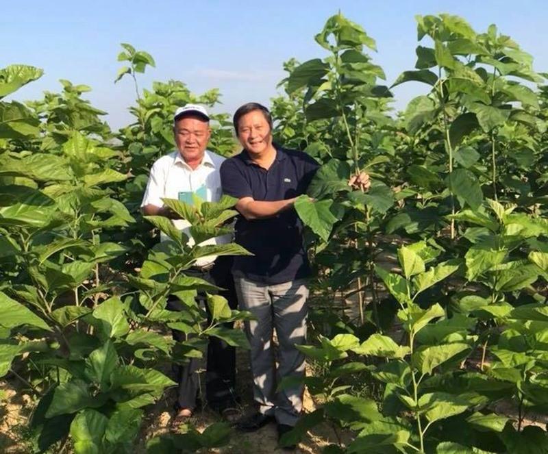Ông Lê Thái Vũ (bên phải) và dự án mang tính ứng dụng khoa học kỹ thuật vào nghề sản xuất dâu tằm đang được nông dân vùng Gò Nổi ủng hộ.