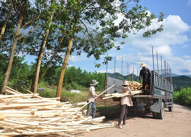 Việc hình thành các nhà máy chế biến gỗ nguyên liệu đã giúp người dân nhiều địa phương của tỉnh dễ dàng trong khâu tiêu thụ sản phẩm. Ảnh: VĂN SỰ