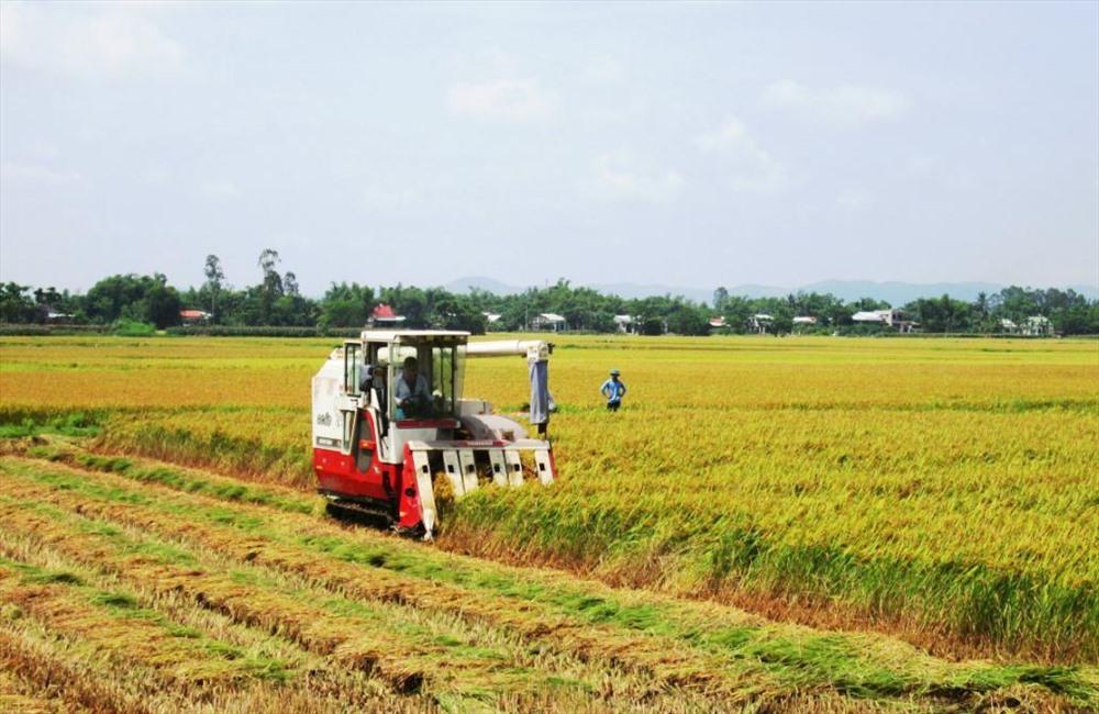 Mặc dù đã nỗ lực triển khai nhưng thời gian qua việc xây dựng mô hình cánh đồng mẫu phục vụ sản xuất hàng hóa ở các địa phương chưa nhiều. Ảnh: D.S