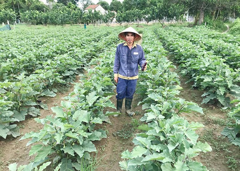 Anh Nguyễn Quốc Oai phát triển tổ hợp tác trồng rau củ quả cho thu nhập cao. Ảnh: T.Q