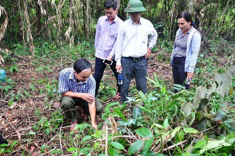Ông Nguyễn Văn Tình - Giám đốc Ban Quản lý rừng phòng hộ Đăk Mi (người ngồi) giới thiệu với đoàn khảo sát về khu vực trồng cây sa nhân tím. Ảnh: V.ANH