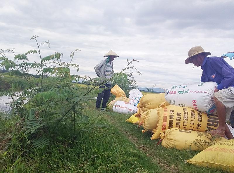Mặc dù các hộ dân ra quân chặt phá, nhưng cây mai dương vẫn mọc lên rất nhanh tại thôn Ngọc Sơn Tây, xã Bình Phục. Ảnh: BIÊN TÂN