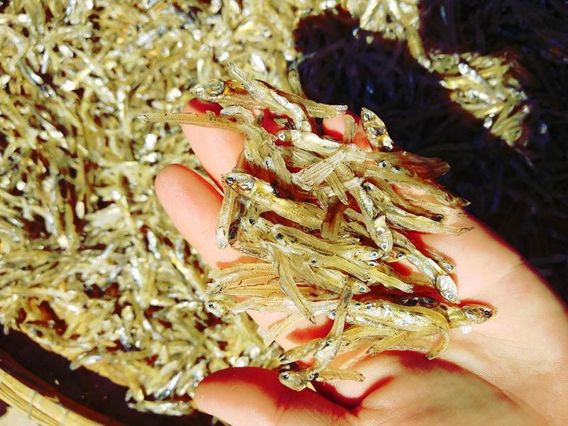 Nguồn nguyên liệu chế biến sản phẩm Cô Kiệu được lấy từ xã Tam Hải (Núi Thành). Ảnh: C.N