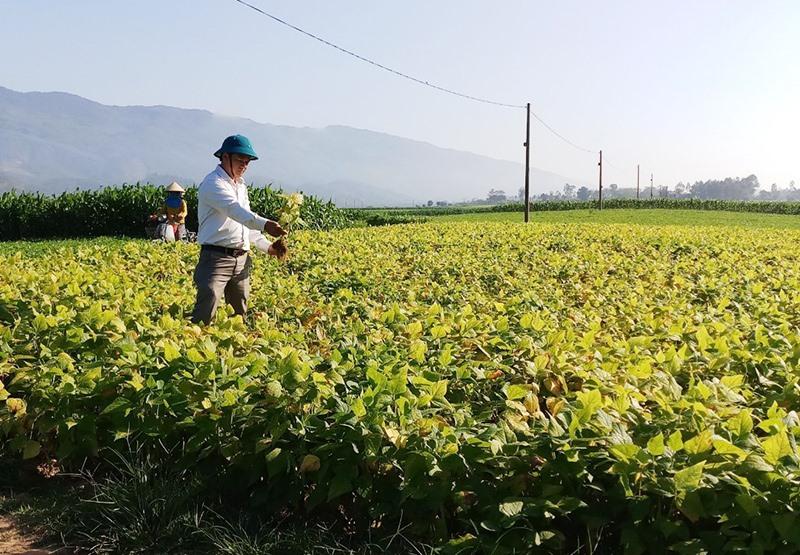 Bí thư xã Đại Hồng - Huỳnh Hưng Quang kiểm tra thực tế sản xuất nông nghiệp trên địa bàn. Ảnh: Q.H