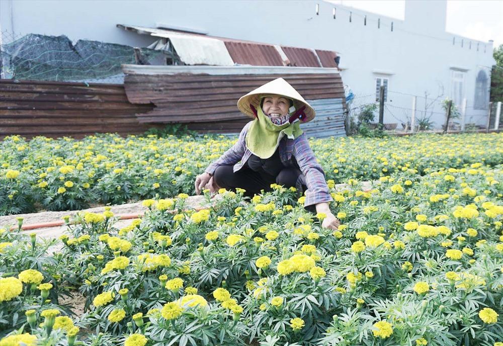 Bà Lê Thị Nguyệt chăm sóc vườn hoa cúc vạn thọ với hơn 1.000 cây bán dịp tết. Ảnh: L.TRANG