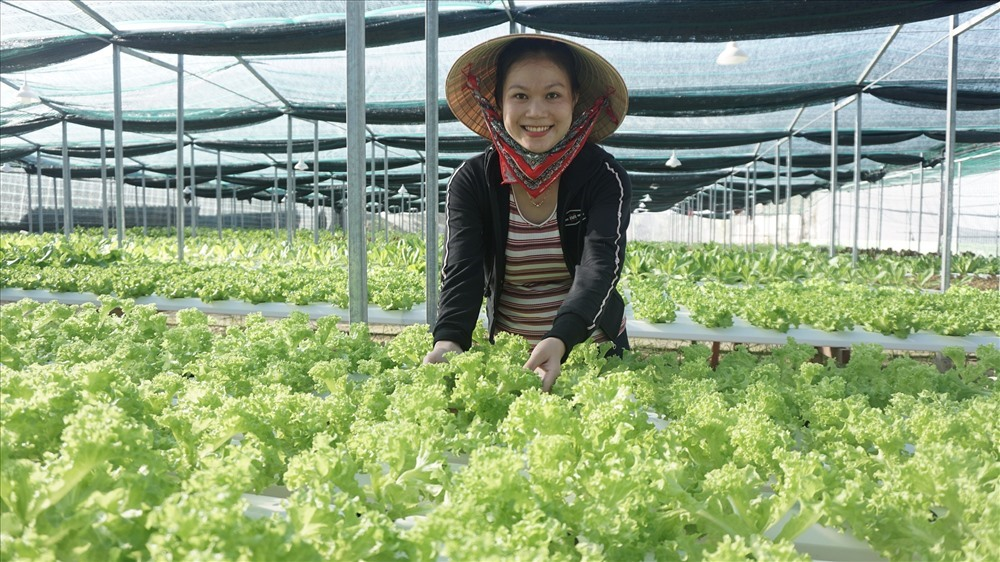 Vườn rau thủy canh của chị Nguyễn Thị Y (Duy Hải, Duy Xuyên) sẵn sàng cho vụ thu hoạch tết