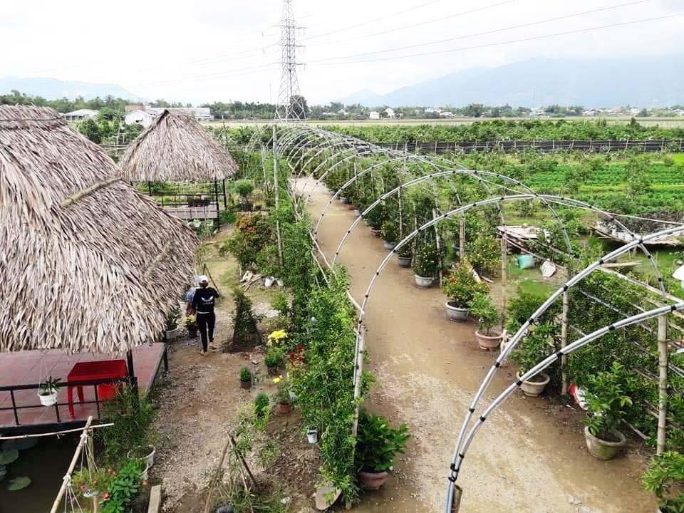 Khu vườn sinh thái của HTX Hồ Lộc được nhiều bạn trẻ và du khách trong và ngoài địa phương thích thú. Ảnh: HOÀNG LIÊN