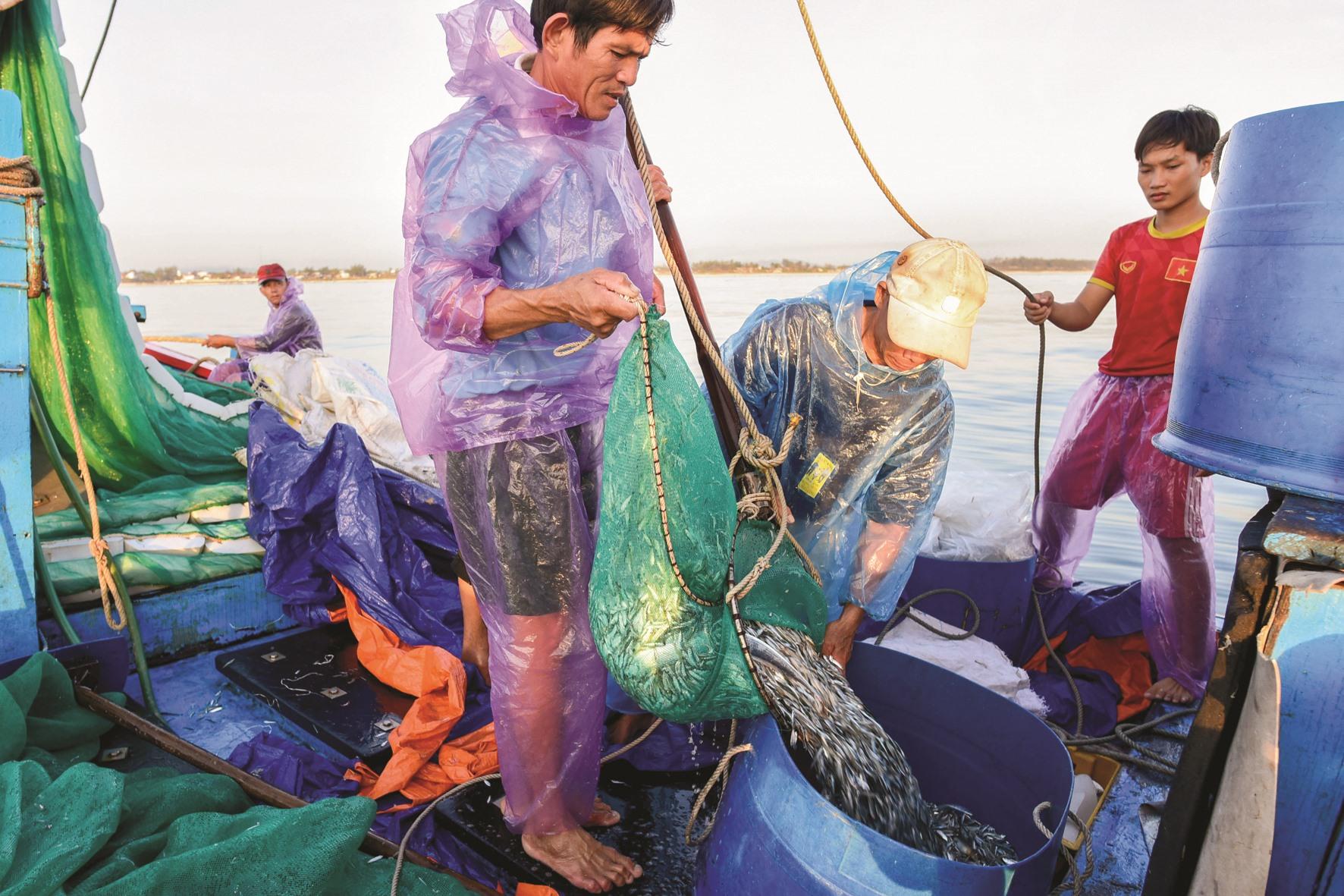 Cá cơm trên vùng biển Tam Thanh là loại cá cơm than rất giàu dinh dưỡng. Chính từ loại cá cơm này sẽ cho ra dòng nước mắm đậm đà hương vị của quê xứ Tam Thanh.