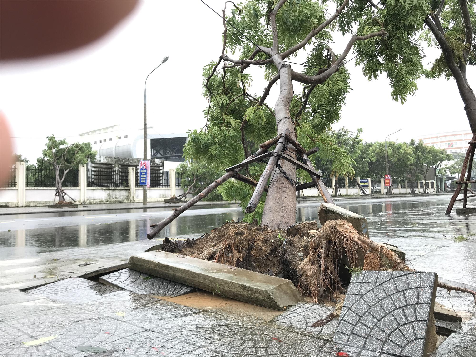 Nhiều cây xanh tại Tam Kỳ bị bật gốc, ngã đổ. Ảnh: VINH ANH