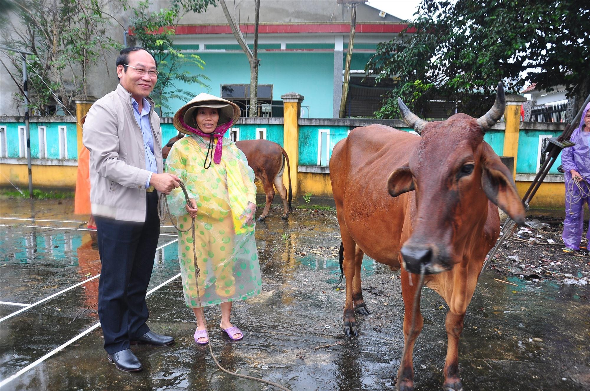 Chủ tịch Ủy ban MTTQ Việt Nam tỉnh Võ Xuân Ca tặng bò cho người nghèo.