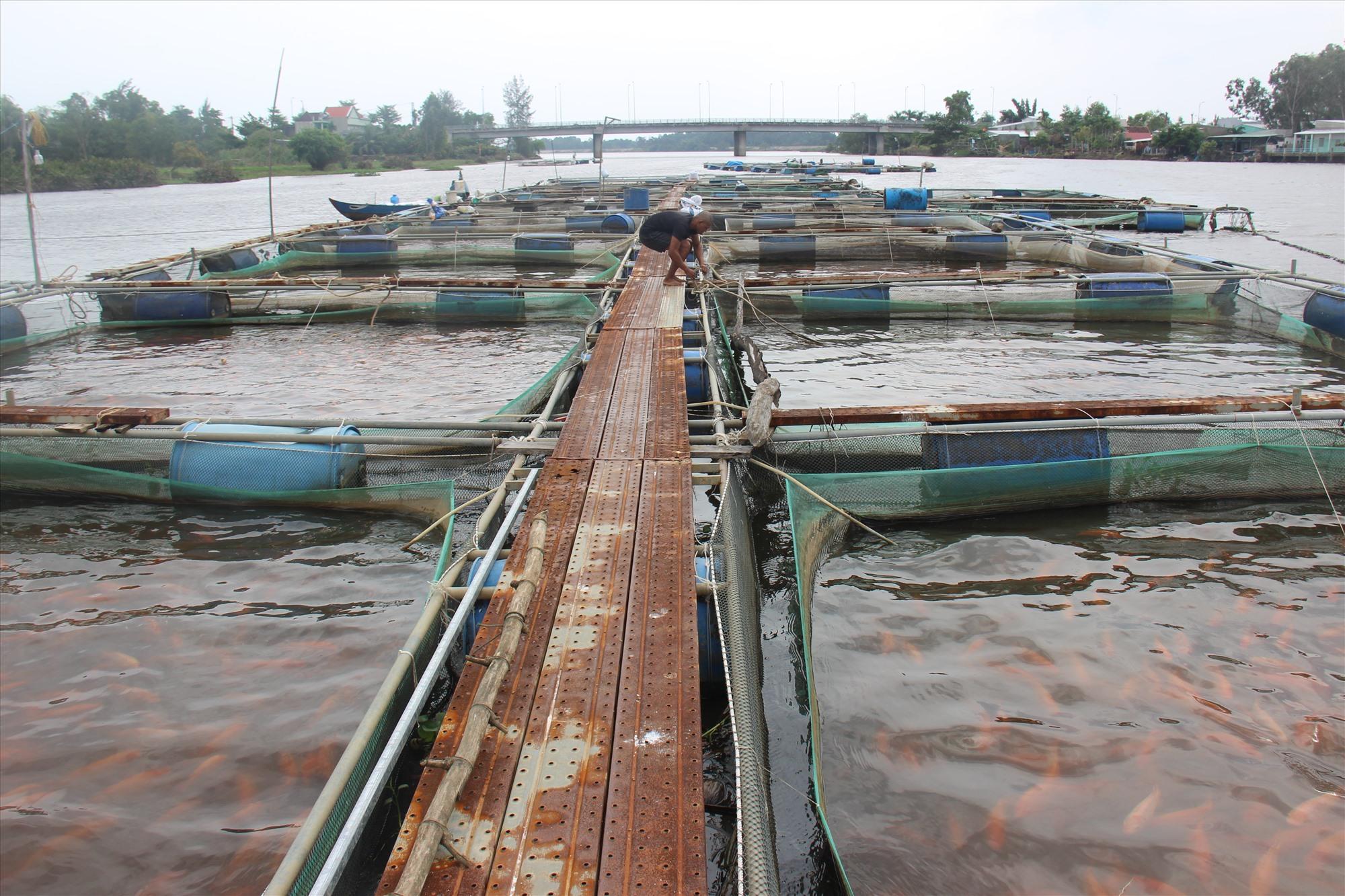 Neo đậu cá lồng trên sông Tam Kỳ. Ảnh: HOÀI AN