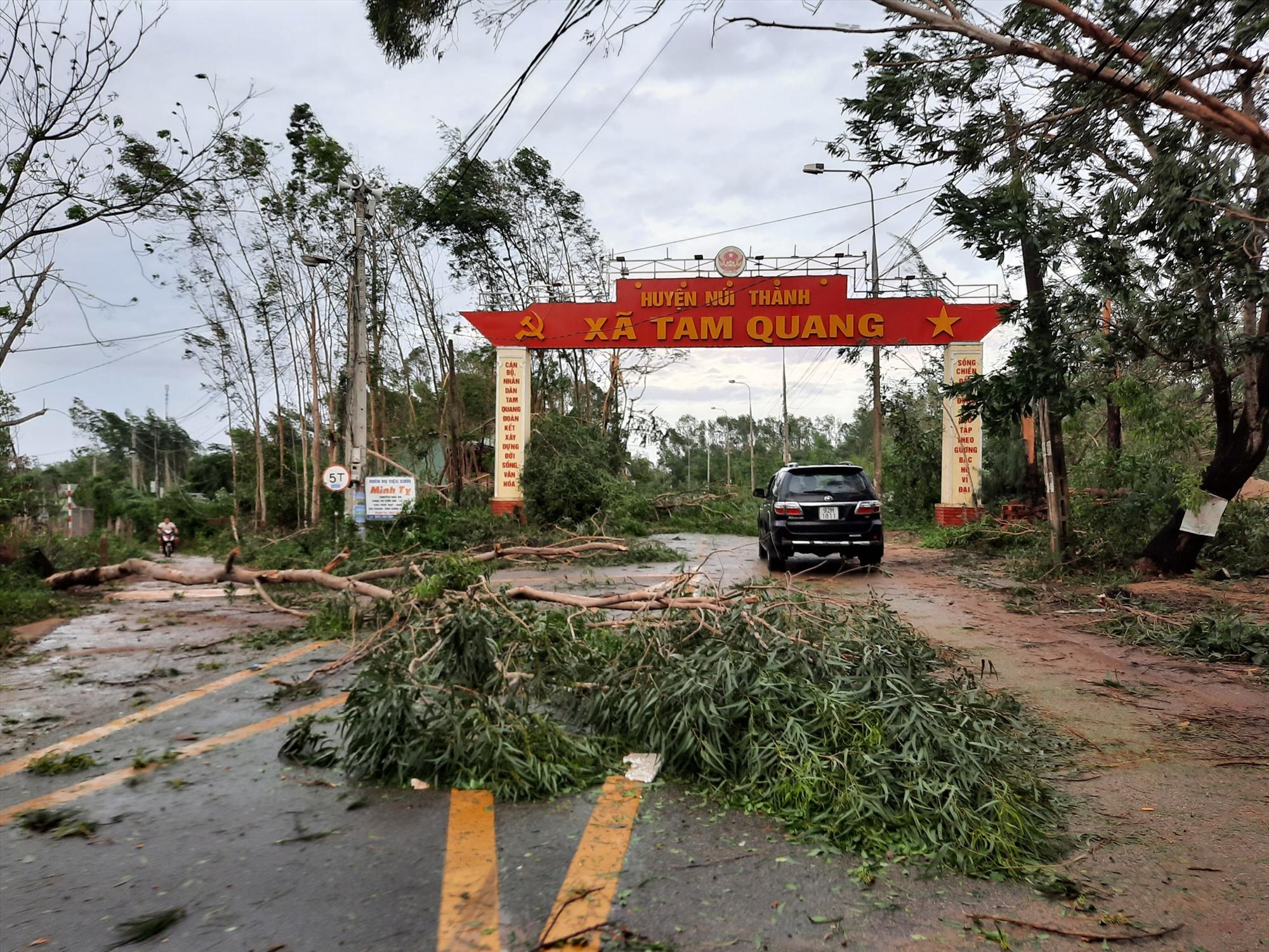 Cây cối ngã đổ tại xã Tam Quang, bão số 9 ít gây thiệt hại lớn về tài sản tại xã này .Ảnh: Đ.ĐẠO