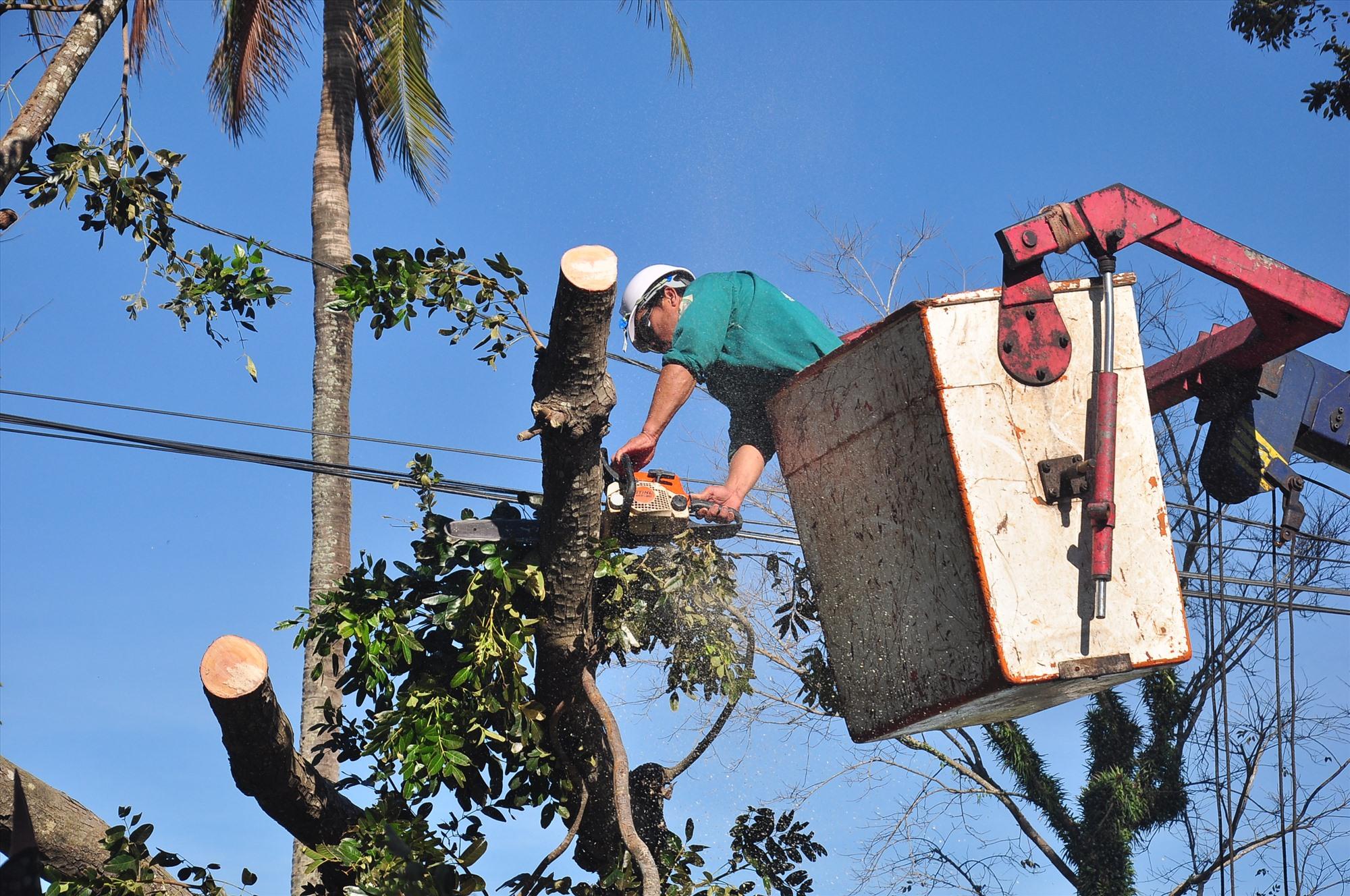 Công nhân đang thu dọn cây cối ngã đổ tại Tam Kỳ. Ảnh: VINH ANH