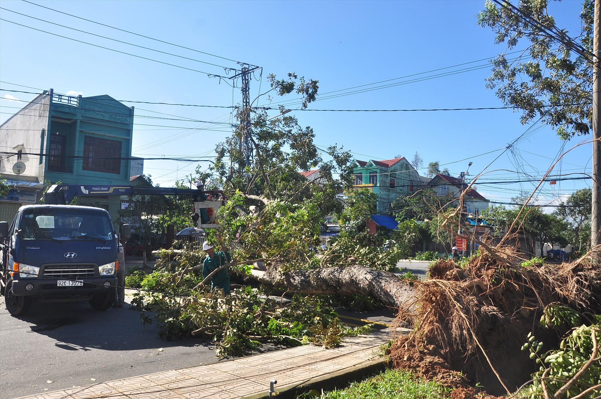 Tại Tam Kỳ, công tác khắc phục sự cố cũng đang được thực hiện khẩn trương. Trong ảnh, một cây xà cừ lớn bị ngã trên đường Hùng Vương. Ảnh: VINH ANH