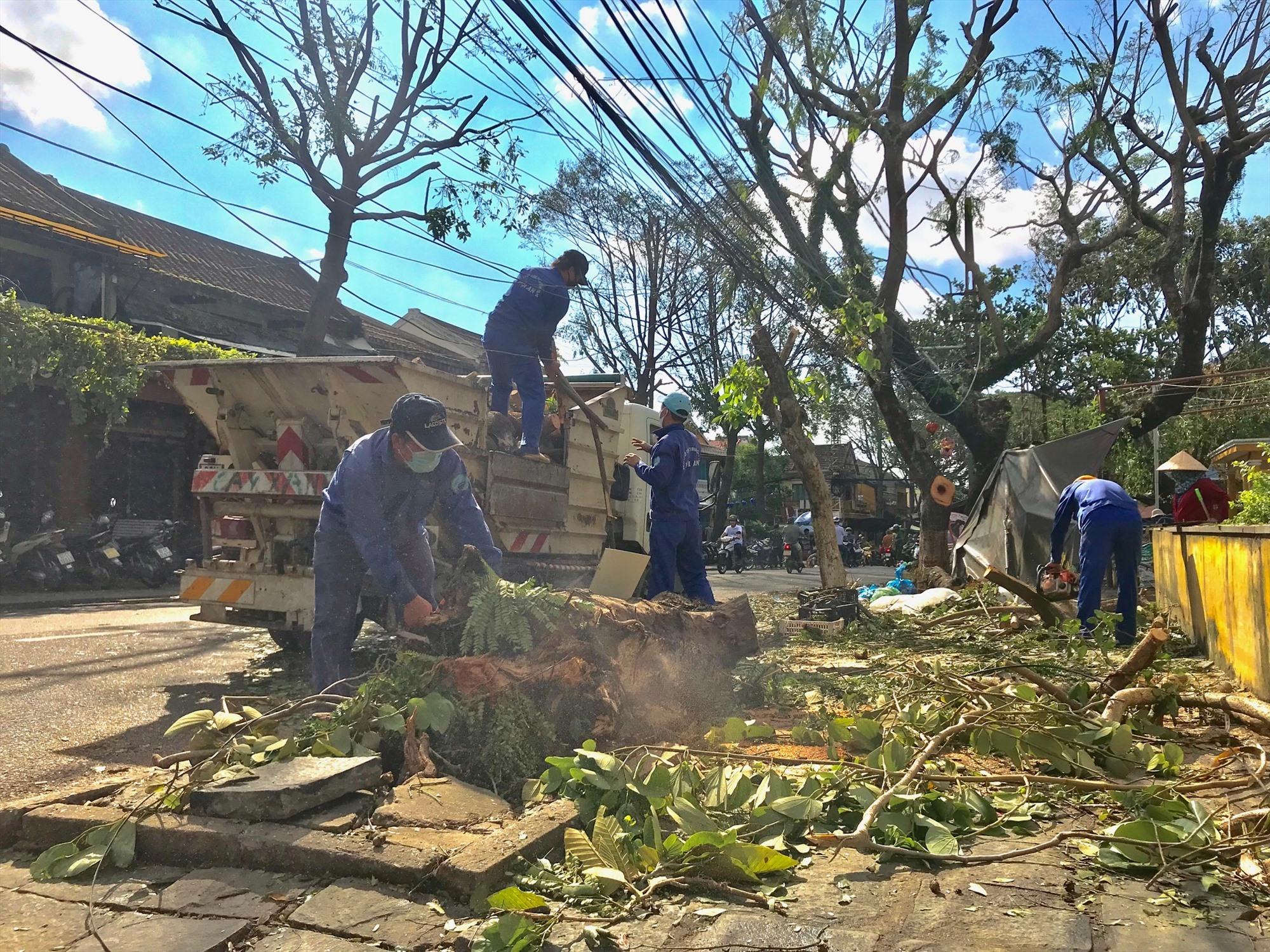 Công nhân môi trường đang khẩn trương thu gọn cây cối gãy đổ tại Hội An. Ảnh: Q.T