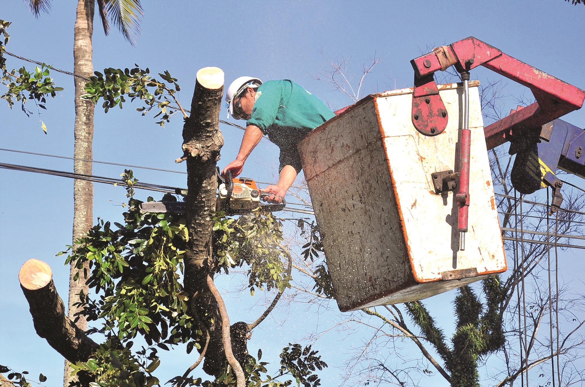 Công nhân cây xanh đang cắt cành, thu dọn một cây xanh ngã đổ tại TP.Tam Kỳ. Ảnh: VINH ANH