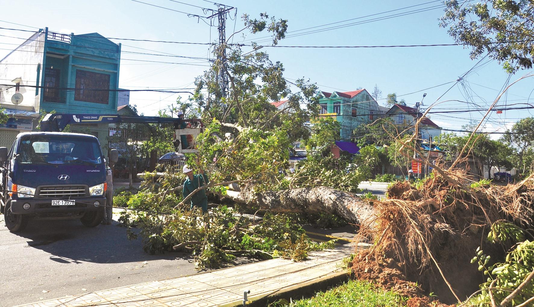 Bão số 9 làm hàng loạt cây xanh khu vực nội thị Tam Kỳ và các địa phương ngã đổ. Ảnh: VINH ANH