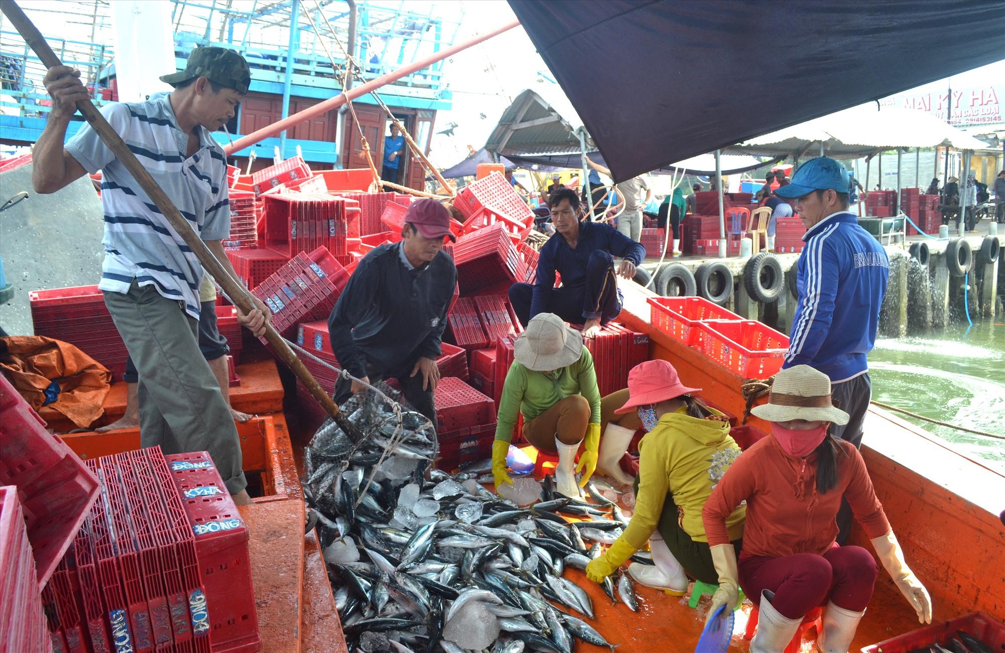 Ứng dụng công nghệ mới để bảo quản hải sản giúp ngư dân tăng giá trị kinh tế thu được ở mỗi chuyến biển. Ảnh: VIỆT NGUYỄN