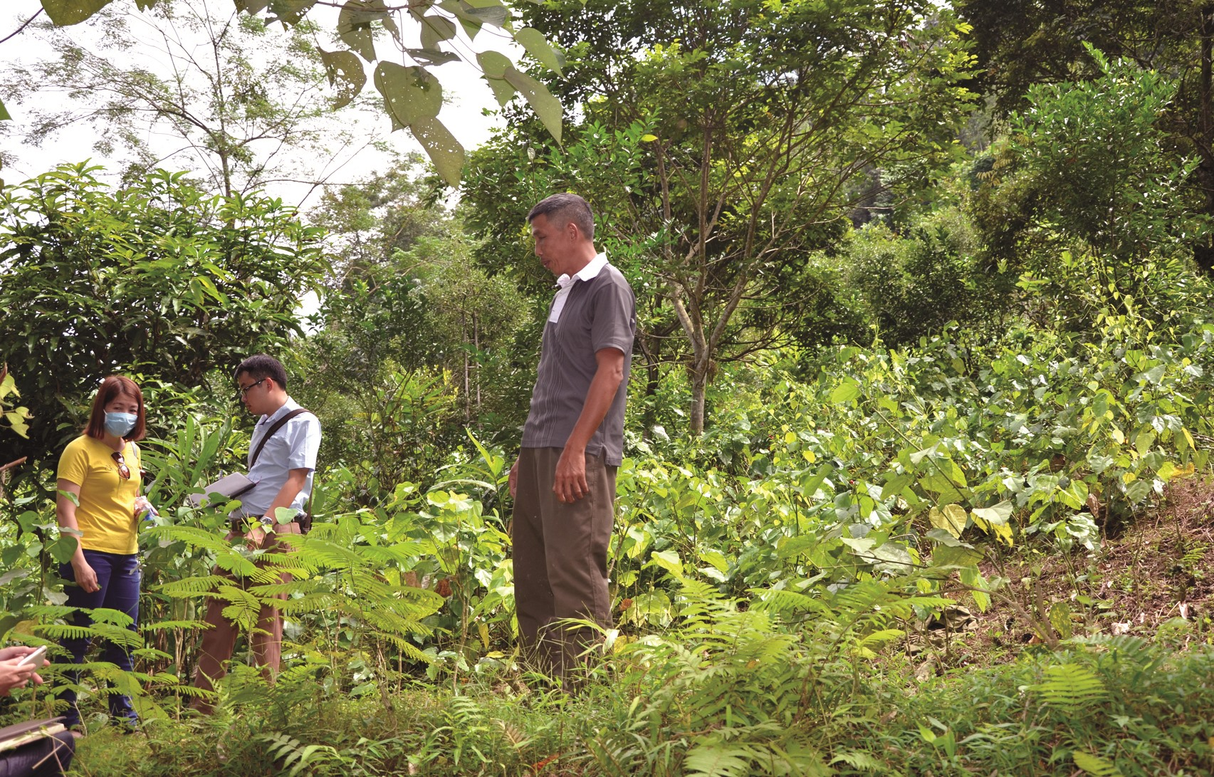 Mô hình vườn rừng nông - lâm kết hợp có khả năng hấp thụ các-bon cao gấp 4 lần so với trồng thuần loài. Ảnh: T.H