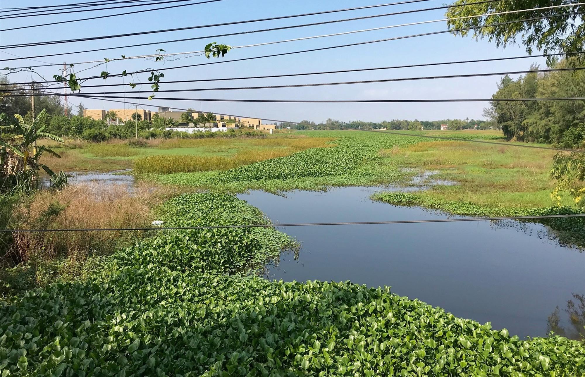 Sông Cổ Cò đoạn qua thị xã Điện Bàn vẫn đang bị tắc. Ảnh: Q.T