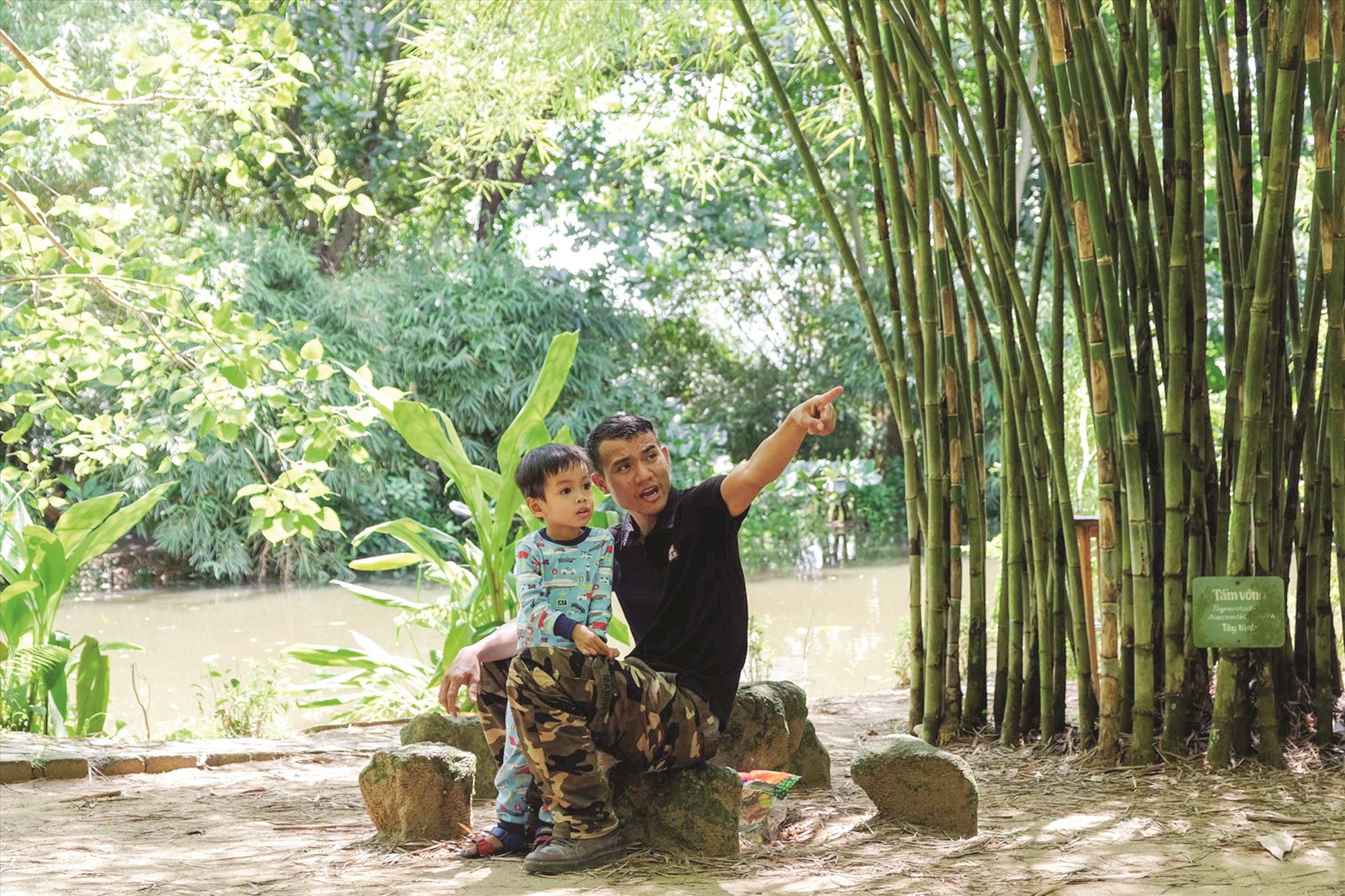 Mỗi ngày có hàng trăm lượt người tìm đến vườn tre để dạo chơi, ngắm cảnh.