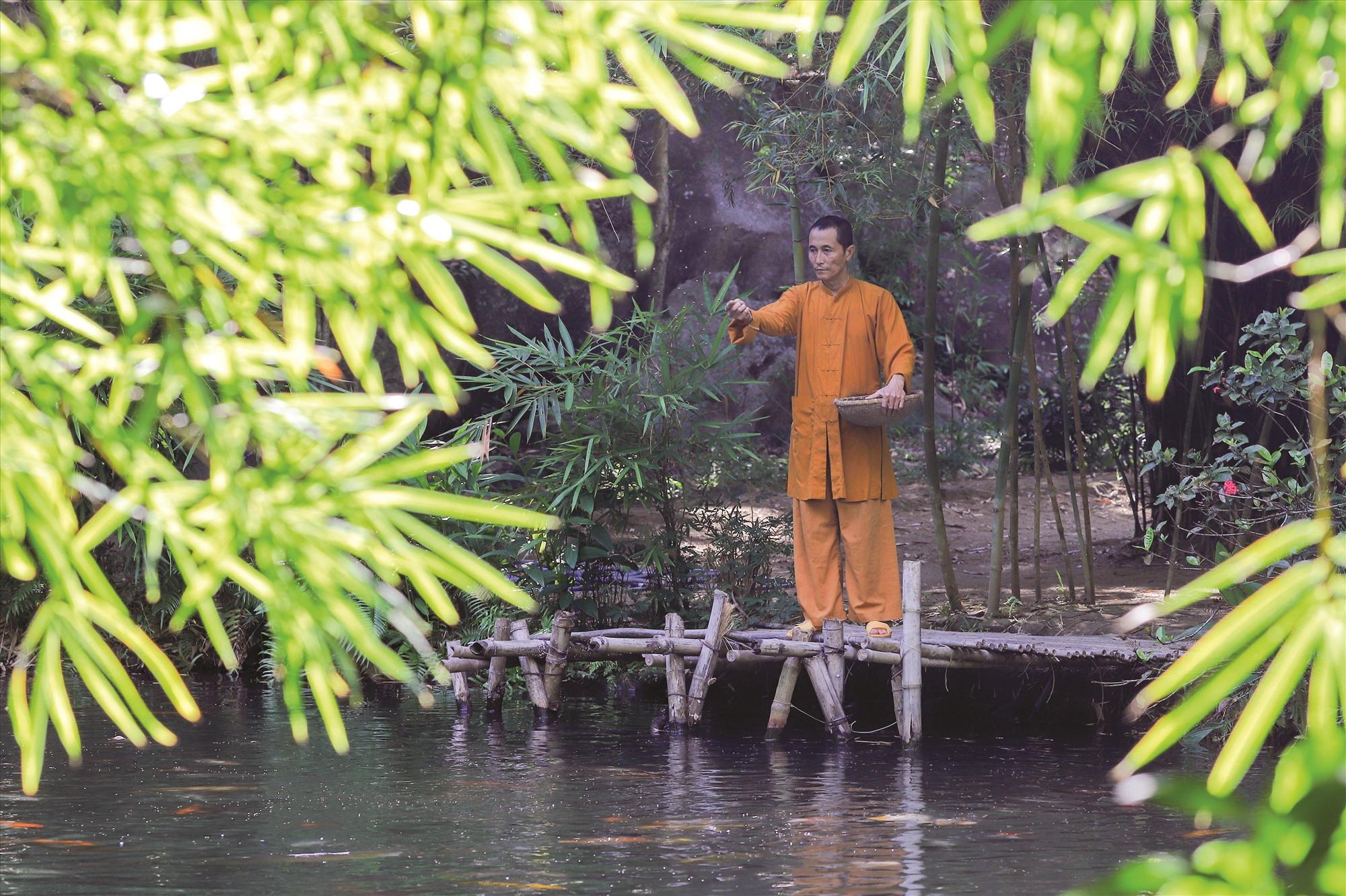 Chọn vườn tre làm nơi tu hành, mỗi ngày thầy Thích Thế Tường có những khoảng không gian tĩnh tâm, thong dong tự tại. Ông đào thêm ao cá, trồng tre xung quanh để tạo thêm điểm nhấn cho khu vườn.