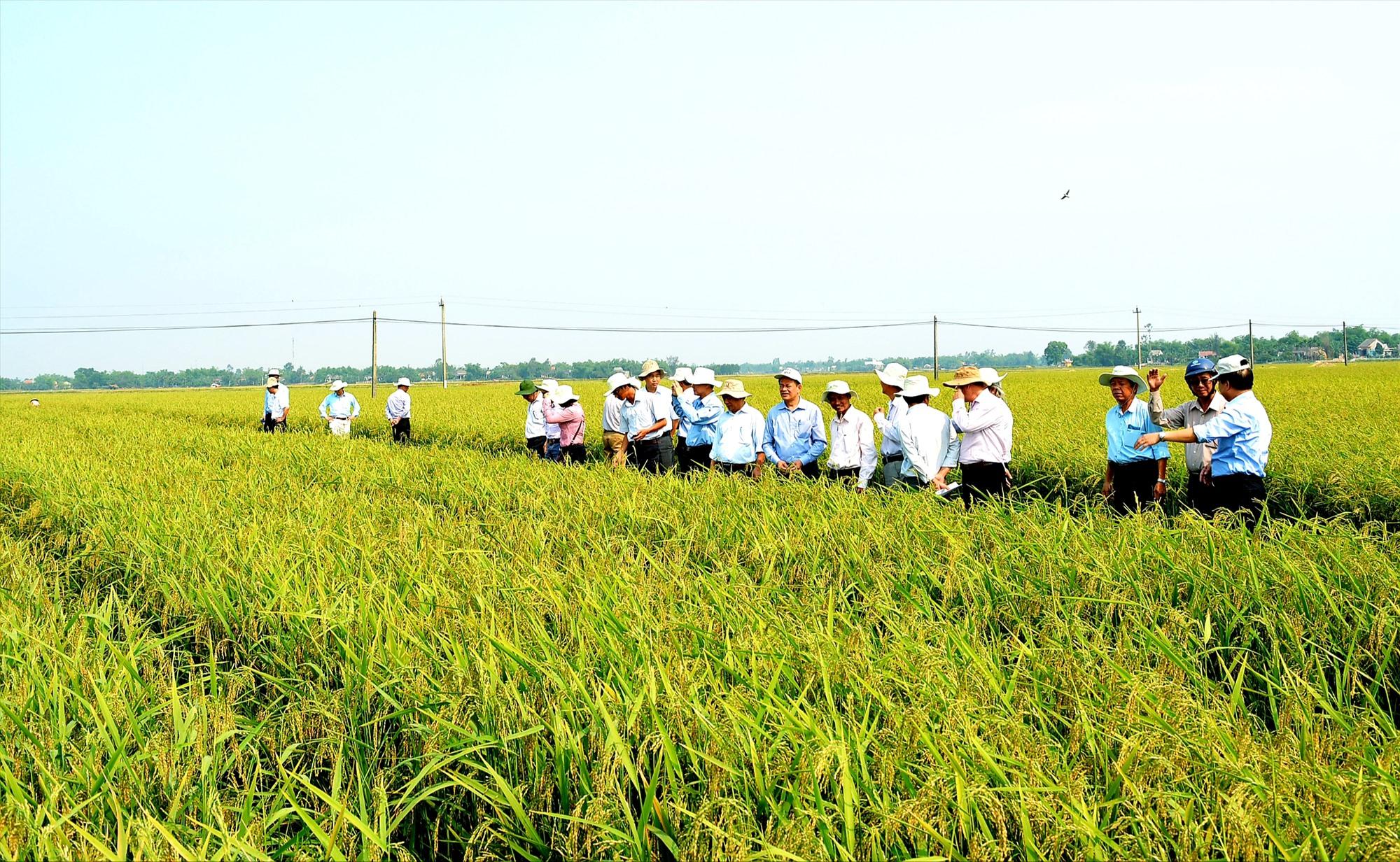 Thời gian tới, phải đẩy mạnh liên kết sản xuất nông nghiệp theo chuỗi giá trị để tạo đầu ra cho nông sản và nâng cao hiệu quả kinh tế cho nông dân.  Ảnh: VĂN SỰ