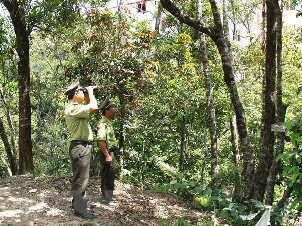 Vườn quốc gia Sông Thanh được nâng hạng từ Khu bảo tồn thiên nhiên Sông Thanh. Ảnh: TTXVN